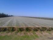Excellente ferme titrée de vines 7 ha