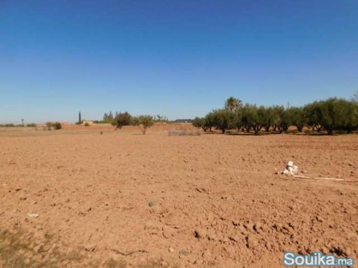 Terrain 1 ha à vendre route de Fès km 14 Marrakech