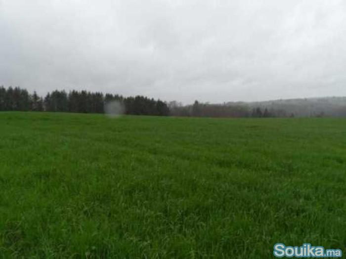 ارض فلاحية ممتازة للبيع 55000 متر مربع بالمنصورية