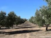 ferme en location 10 ha à marrakech