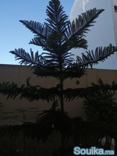 plantes et arbres