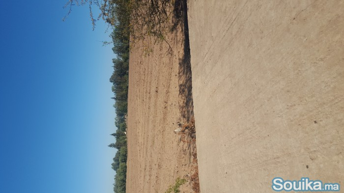 34 hectars guiche à 10 km de Chichaoua